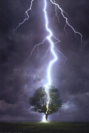 lightning striking  tree fine art print  unknown