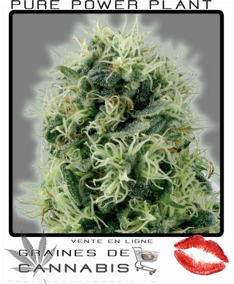 graine de cannabis interieur 28 images graine de cannabis interieur feminise 28 images