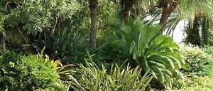 Welche Erde Für Palmen : palmen f r die bepflanzung im garten oder wintergarten sowie palmen f r die gartenplanung und ~ Watch28wear.com Haus und Dekorationen