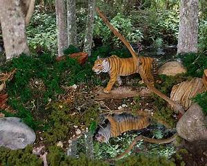 Tiger Diorama | The o'jays, Ponds and Zoos