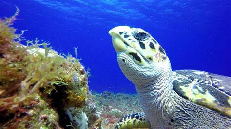 eel 4k uhd grouper tiger moray cozumel
