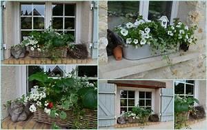 Fleur D Hiver Pour Jardinière : dans le jardin en ce moment une fee d 39 hiver ~ Dailycaller-alerts.com Idées de Décoration