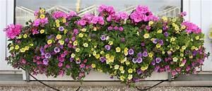 Balkonkästen Winterhart Bepflanzen : bl tenpracht am fenster gartenblog ~ Lizthompson.info Haus und Dekorationen