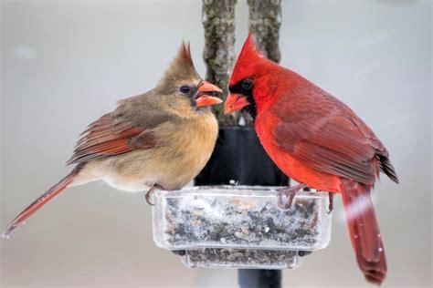 winter bird foods  farmers almanac