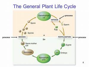 The General Plant Life Cycle Jpg  960 U00d7720
