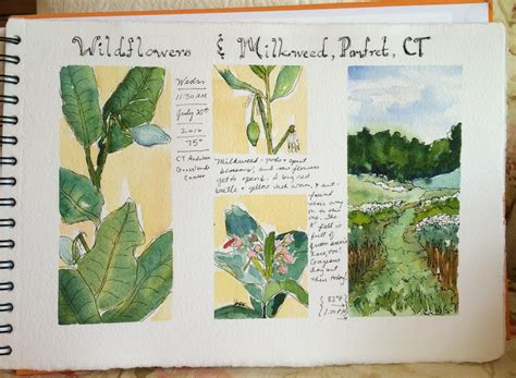 Roxanne Steed's Painting A Day Nature Sketchbook
