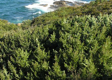 of bush albany woolly bush ockham s razor