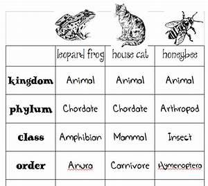 Animal Classification Charts  U2013 Skip The School