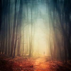 hazy forest dirk wuestenhagen imagery