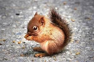 Metamorphosis Design Blog 25 Cute Small Animals