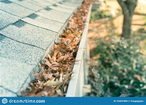 clogged gutter  front yard  roof shingles