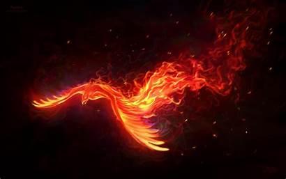 Phoenix Bird Desktop Background Backgrounds Fenix Fire