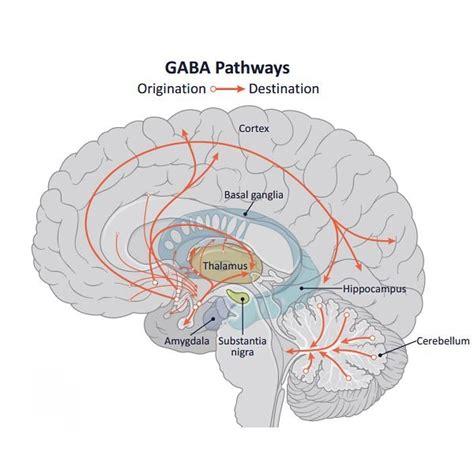 brain chat gamma aminobutyric acid gaba   naturally