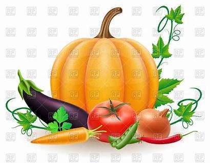 Harvest Autumn Vector Pumpkin Vegetables Illustration Clipart