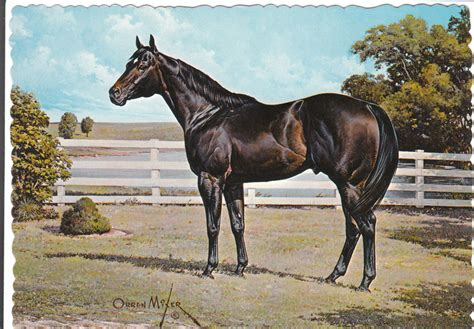 horse quarter horses paintings mixer orren painting go artist race american equine he aqha gotta aaa collectables artwork drawings perfect