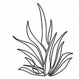 Plants Coloring Pages Seaweed Drawing Plant Underwater Grass Sea Clipart Ocean Colouring Printable Kelp Shrubs Outlines Draw Aquatic Seagrass Bushes sketch template