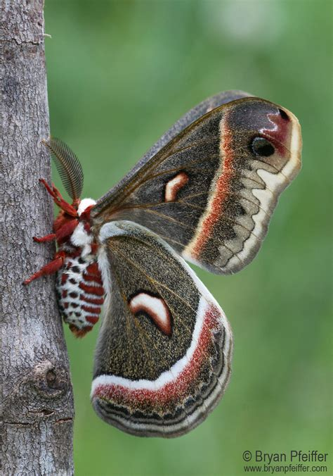 moths  montpelier bryan pfeiffer