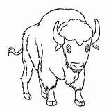 Buffalo Coloring Printable Water Indian Library Visual Similar sketch template