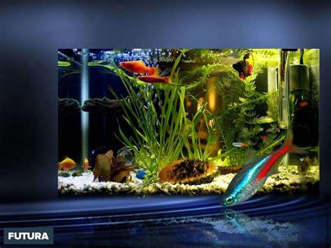 poisson d aquarium en 5 lettres