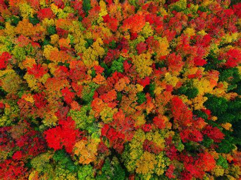 reddit of color oc fall foliage colors in peacham vermont 4000x3000