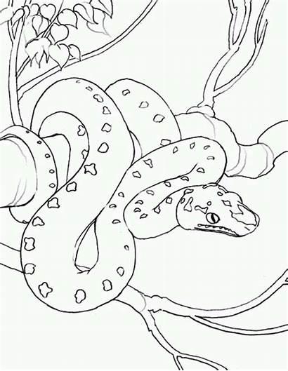 Snake Coloring Anaconda Pages Exotic Colouring Printable
