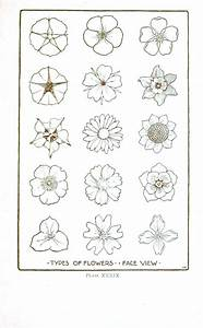Botanical – Flower – Flower line drawings 2   Vintage ...