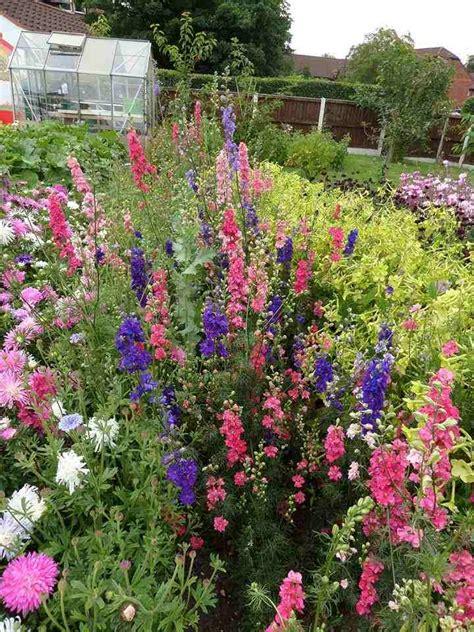 larkspur garden design larkspur for the cutting patch higgledy garden