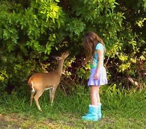 Big Pine Key Key Deer