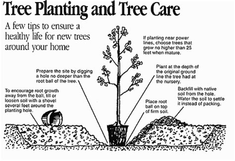 how to plant a tree tree planting instructions richmond power light