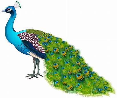 Peacock Transparent Clipart Birds Yopriceville Krishna Circle