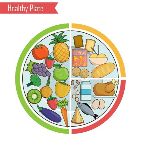 proportion cuisine healthy plate nutrition balance illustration stock vector