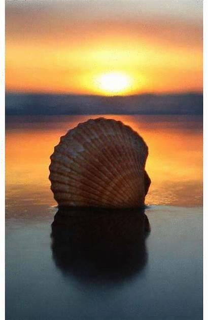 Shells Coquillages Animated Diaporama Photofunky