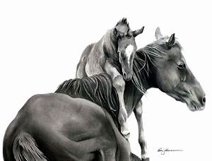 pencil drawing of horse | Shades of Graphite