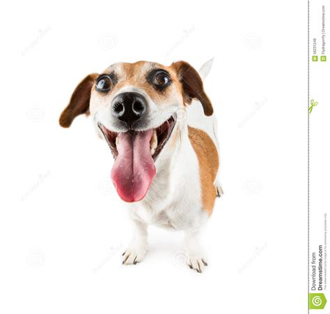 Cheerful Smiling Dog stock image. Image of cute, funny ...