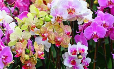 Ciri Ciri Orang Hamil Jenis Jenis Bunga Anggrek Beserta Gambar Dan Ciri Cirinya