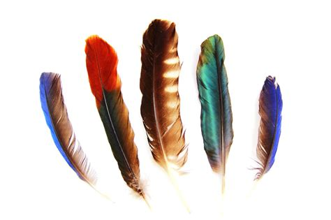 Enthralling Design Ideas And Meanings Of Indian Feather