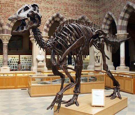 Ee  Edmontosaurus Annectens Ee