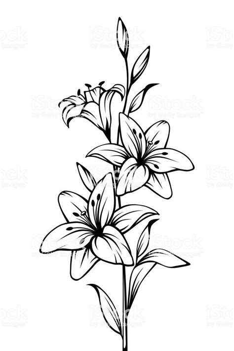 Image result for white lily drawing | Silhouettes in 2019