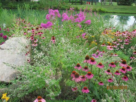 Small Butterfly Garden Ideas Photograph