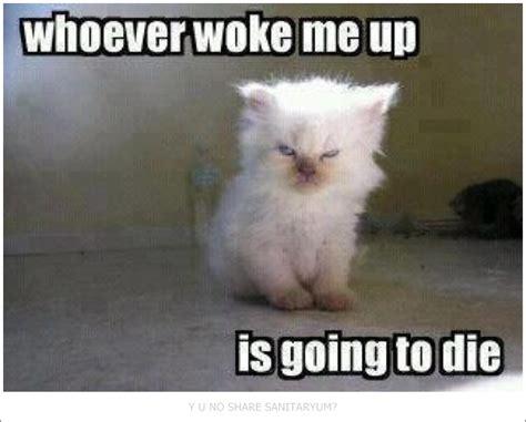 Clean Animal Memes - best 25 funny clean ideas on pinterest clean animal memes funny dog faces and cleaning humor