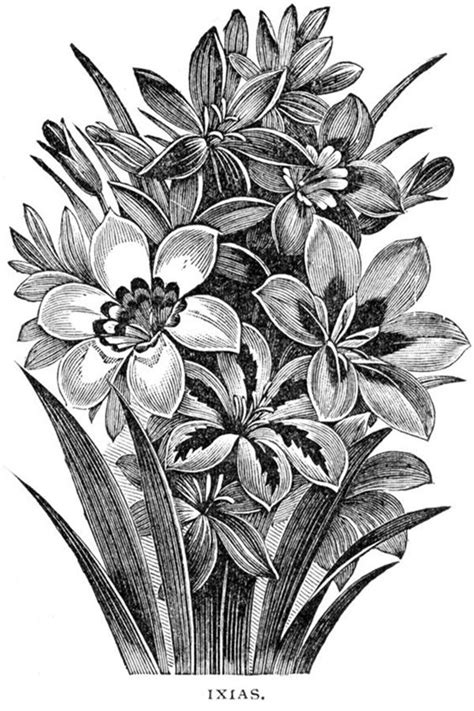 40 Easy Flower Pencil Drawings For Inspiration | Pencil