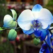 Comment Soigner Une Orchidée : comment soigner une orchid e ~ Farleysfitness.com Idées de Décoration