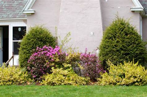trees to plant to house foundation 23 best images about foundation plantings on pinterest landscaping the foundation and summer