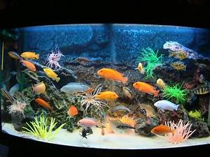 Fische Aquarium Hamburg : 1001 ideen f r aquarium schenken finden sie das beste ~ Lizthompson.info Haus und Dekorationen