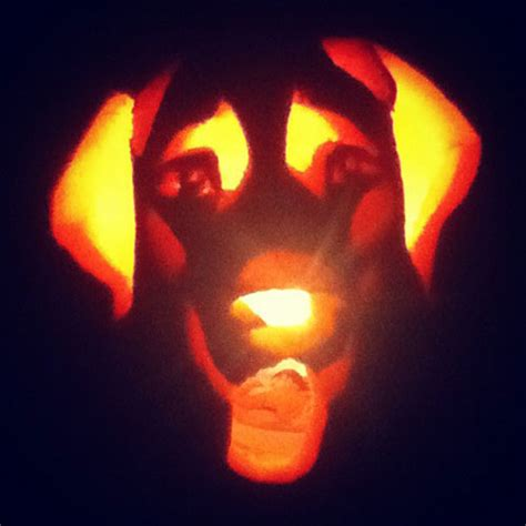 puppy pumpkin carving pups and pumpkins these dogs are works of art page 2