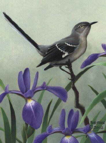 tennessee state bird flower mockingbird  irisnote