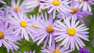 Best Flowers for Bees & Butterflies - Sunset