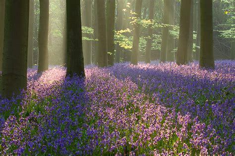 chambre angleterre parterre de fleurs roses en forêt la chambre