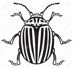 Drawn beetles black and white - Pencil and in color drawn ...