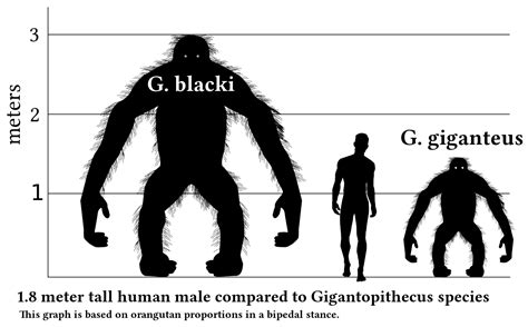 file gigantopithecus v human v1 svg wikimedia commons